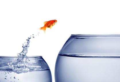 Goldfish jumping to larger bowl
