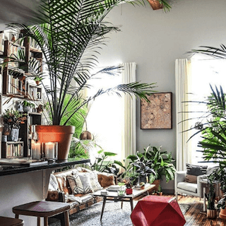 Apartment Therapy Instagram account showing plant-inspired living room