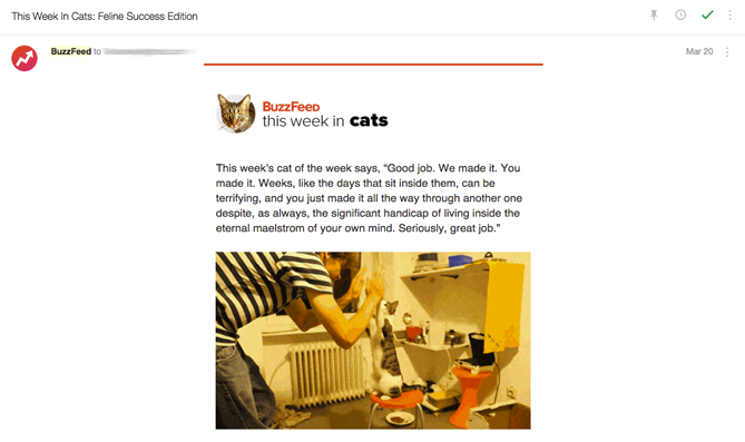 buzzfeed-cat-newsletter