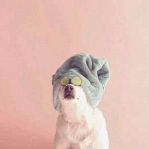 frank-bod-instagram-1.png