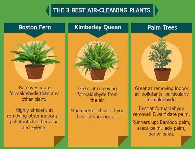 office-plants.jpg