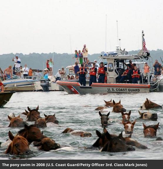 Image credit: Smithsonian magazine featuring pony crossing