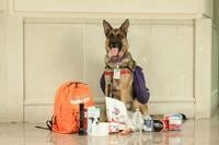 Fred the preparedness dog poses with supplies. Link goes to fredthepreparednessdog.org.