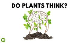 Cartoon illustration of plants and a brain with caption do plants think? Link takes you to PBS science fair projects page.