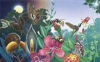 Illustration of bees pollinating flowers. Link goes to FWS' page on pollinators.
