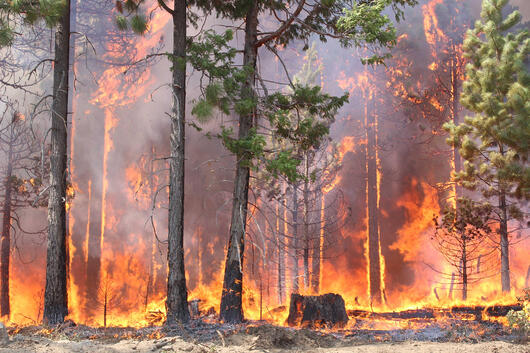 image the importance of renters insurance during wildfires