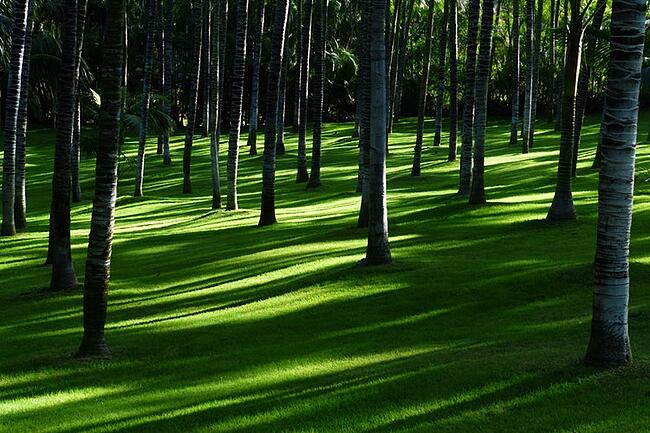 meadow-grass-palm-tree-forest-plenty-of-natural-light-47334