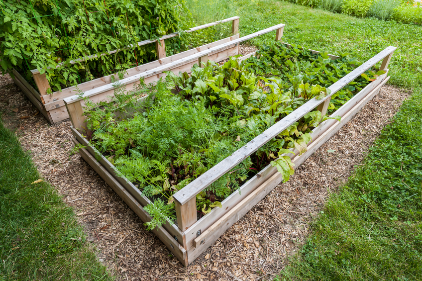 raised_garden_bed_in_backyard.png