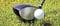 验证和监测高尔夫俱乐部制造的表面制备过程