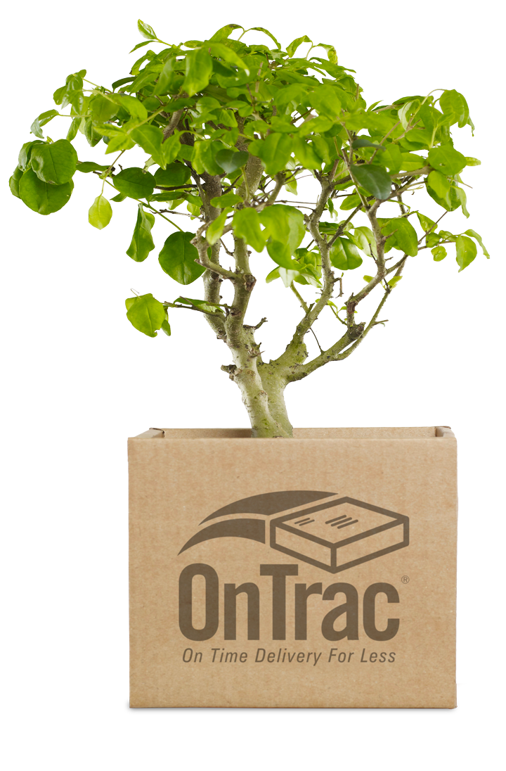 ontrac-tree-in-a-box.png