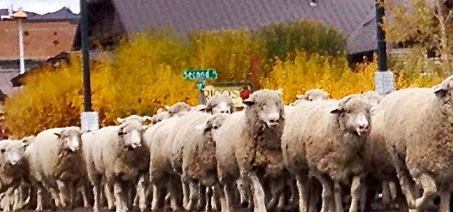 A Slice of Idaho-Trailing of the Sheep Festival