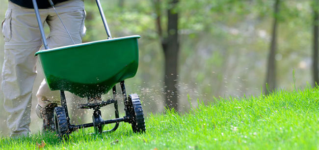 Take Time to Fertilize Now for a Healthy Spring Lawn