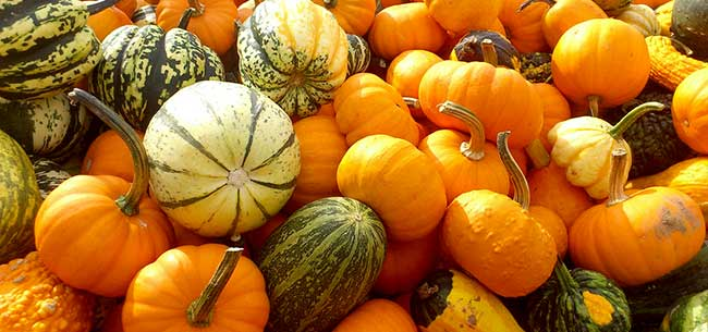 Tips for Buying Pumpkins