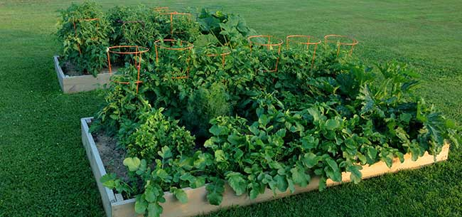 Raised Beds are Perfectfor the Chesapeake Bay Region!