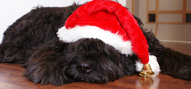Relieve Pet Stress During the Holidays