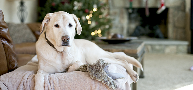 Pet Holiday Photos - Tips from a Local Pet Photographer