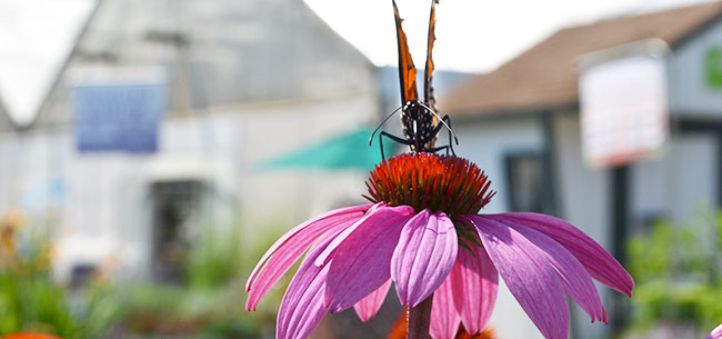 Grow a Garden Oasis for Pollinators with These 4 Tips