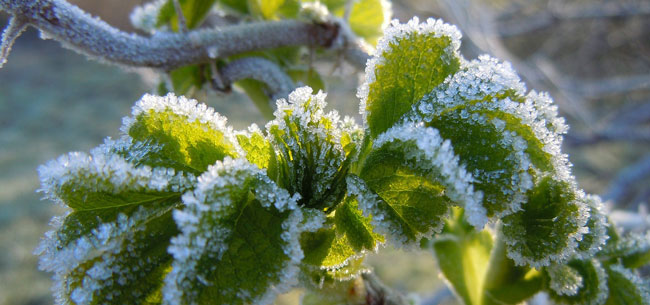 How to Repair Your Garden After a Spring Frost