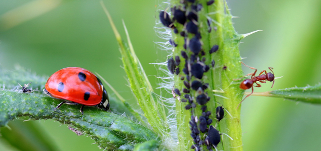 Avoid Bringing Pests into the Home & Garden