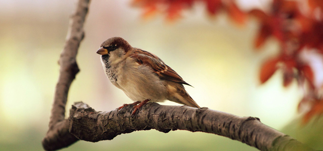 Backyard Birding Tips to Attract Feathered Friends