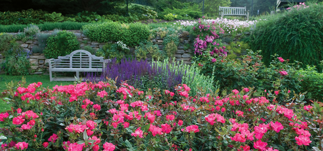Rose Care 101: Tip for Planting and Tending Roses