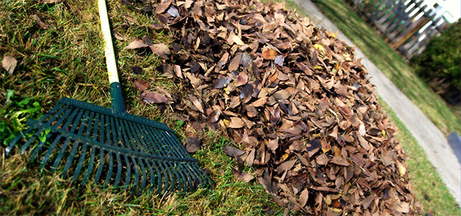 Fall Cleanup a Drag? This Year, Give the Raking and Mulching to Someone Else.