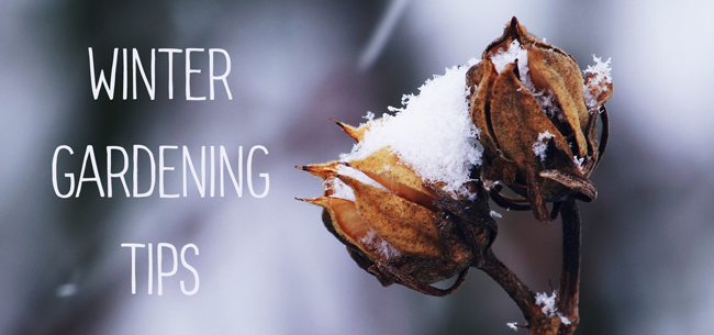 Winter Gardening Tips: 6 Things You Can Do Now