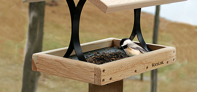 Attracting Birds to Your Backyard in the Winter