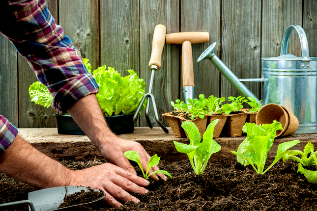 What to Plant Now for a Fall Harvest
