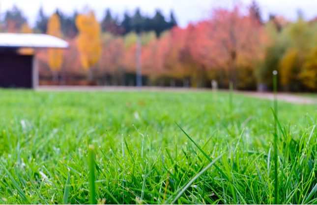 5 Tips for Fall Lawn Care