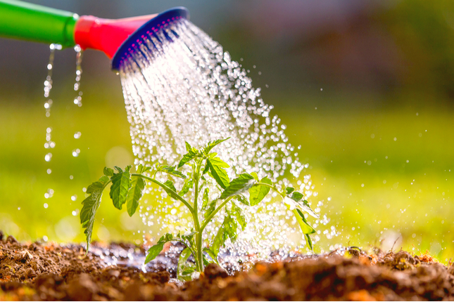 Watering: How Much is Enough?