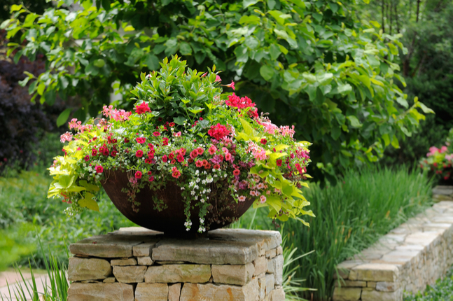 The Sky is the Limit with Container Gardening
