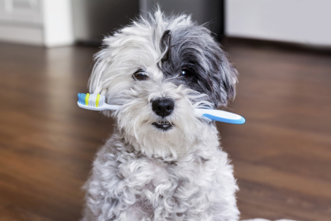 5 Tips for Keeping Your Pet's Teeth Clean and Healthy