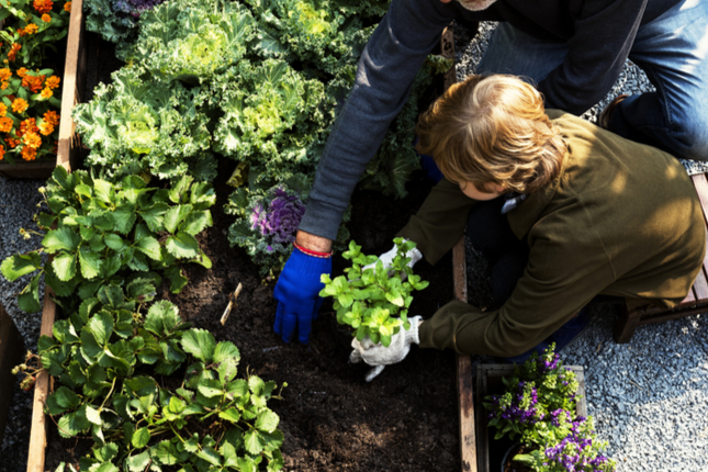 Be an Edible Garden Guru