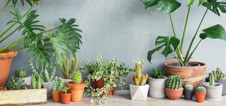 Houseplants Are Always In Season