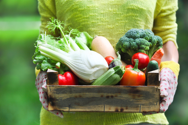 From Garden to Table: Salad Gardens