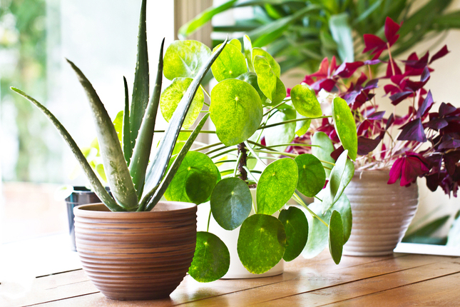 Caring for Houseplants in Winter