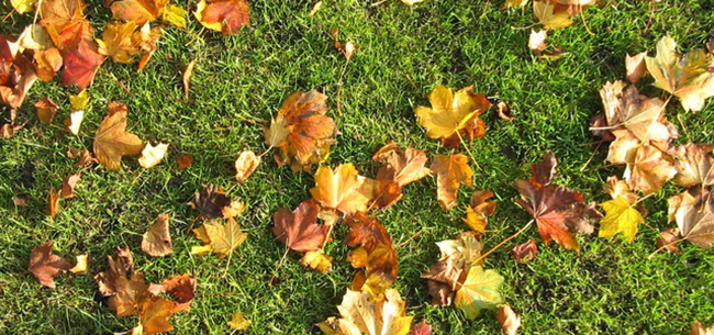 Keep Your Lawn Strong - Even in the Dead Of Winter