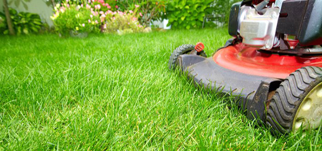 5 Beginner's Rules for Lawn Fertilizer Use in Maryland