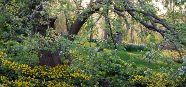 How and What to Plant Under Trees