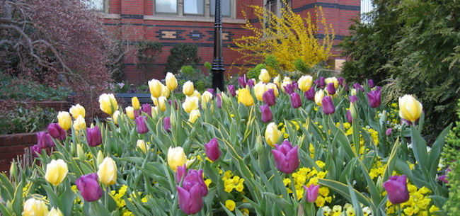 Why I Love Spring-Blooming Bulbs
