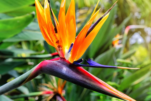 5 Exotic Flower Varieties