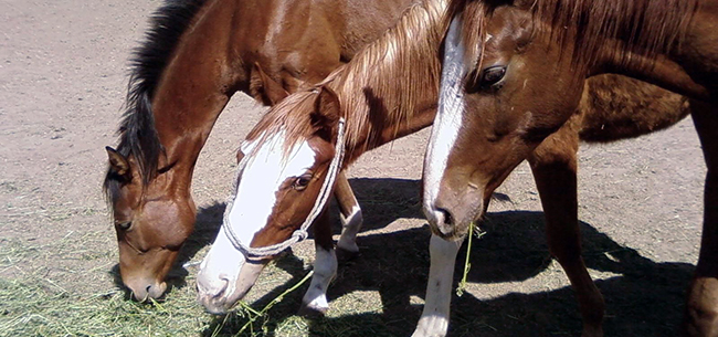 4 Horse Care Myths Debunked