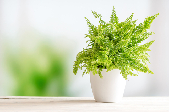 It's Time to Bring Houseplants Inside for Winter