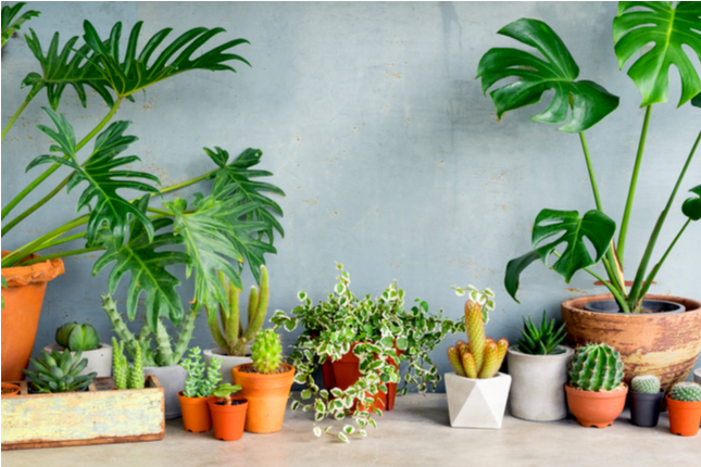 What Type of Pot Should I Put My Houseplant In?