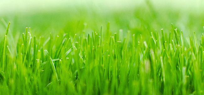 A Quick Guide to Watering your Lawn