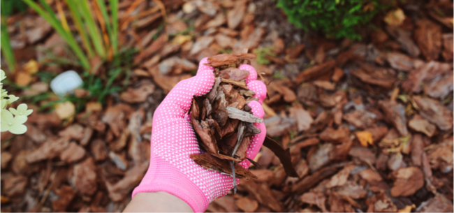 All About Mulch and How It's Different From Compost