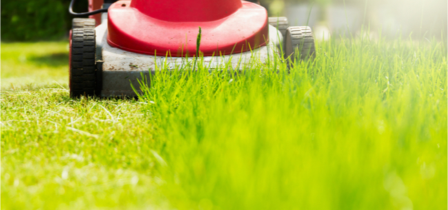 Mike McGrath on Organic Lawn Care