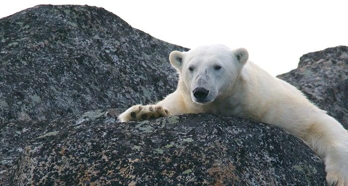 Cambiamenti-Climatici-Polo-Nord