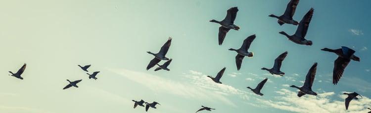 vliegende start als freelancer